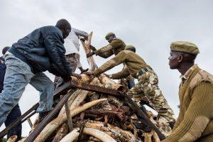 Kenya Ivory Burn 2016